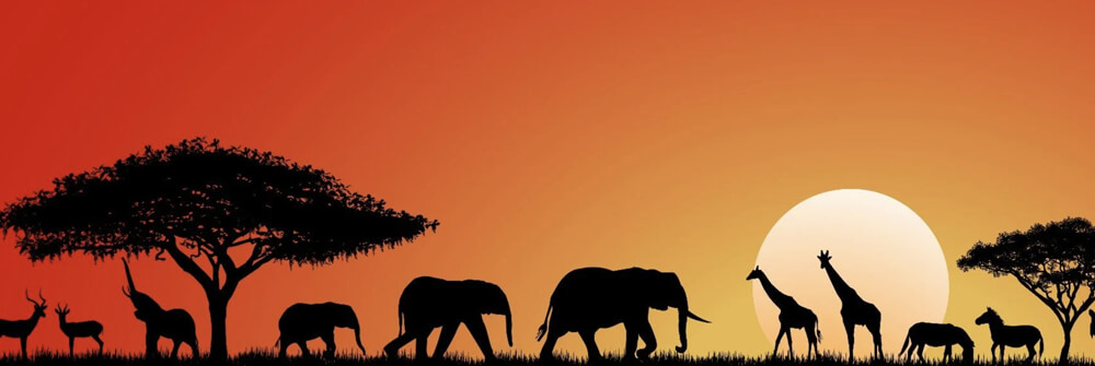Kids Wallpaper with Animals