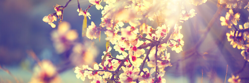 Spring photo wallpapers