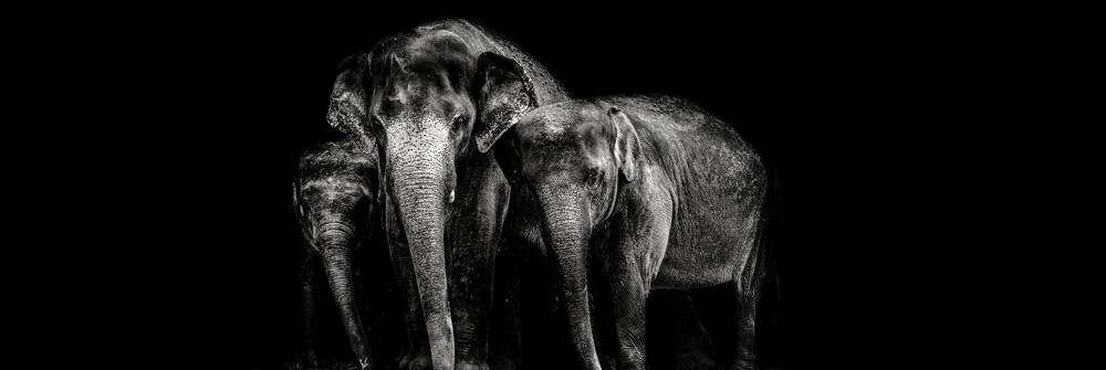 Wallpaper with elephants