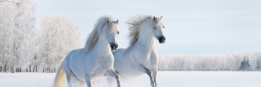 Wallpaper with horses