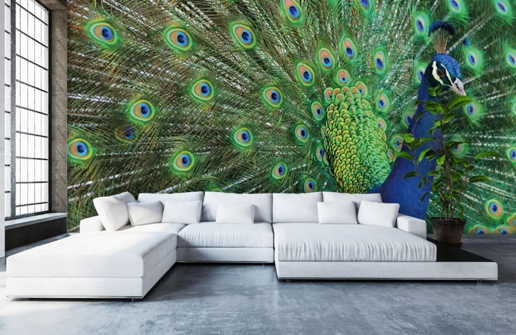 Other - Peacock - Children's room 1