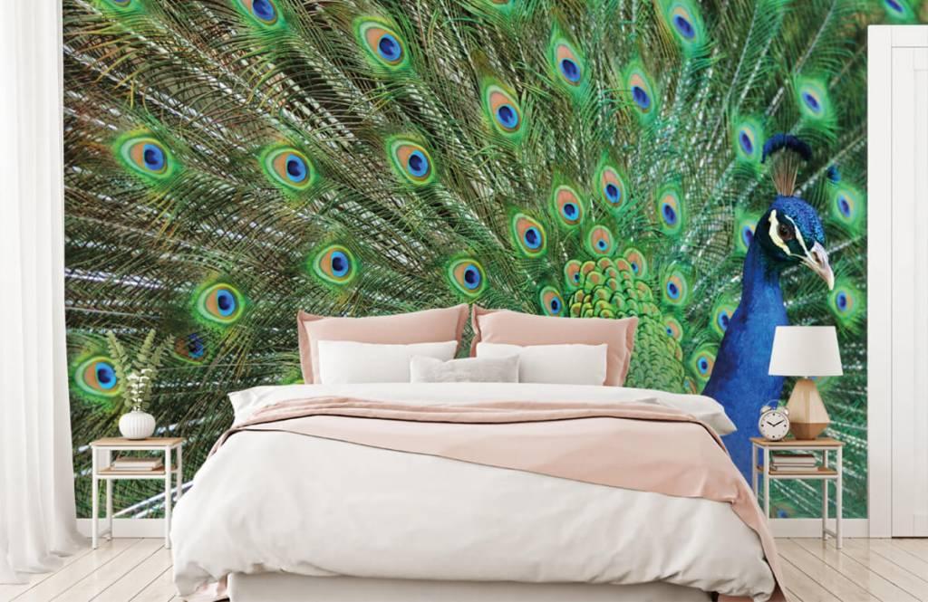 Other - Peacock - Children's room 2