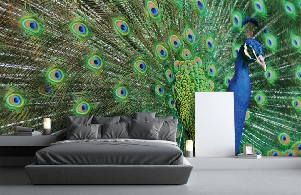 Other - Peacock - Children's room 3