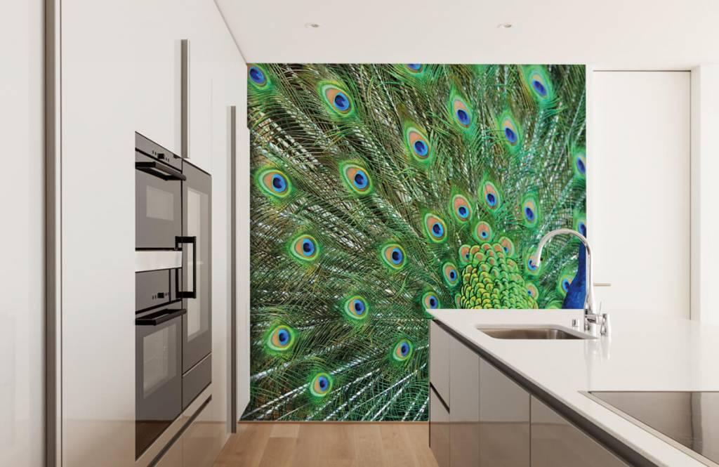 Other - Peacock - Children's room 5