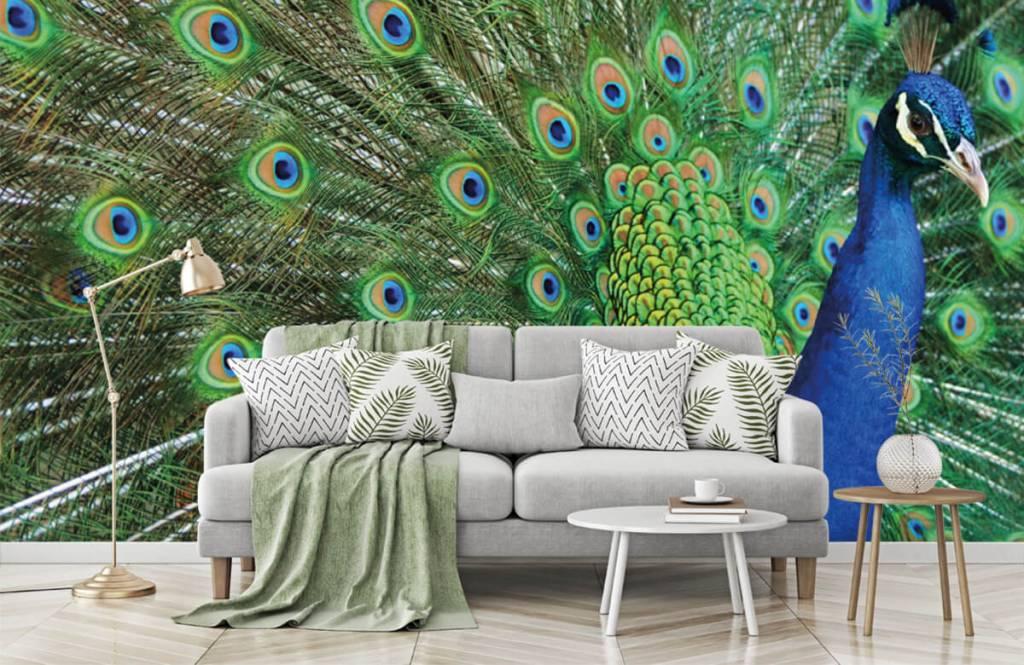 Other - Peacock - Children's room 7