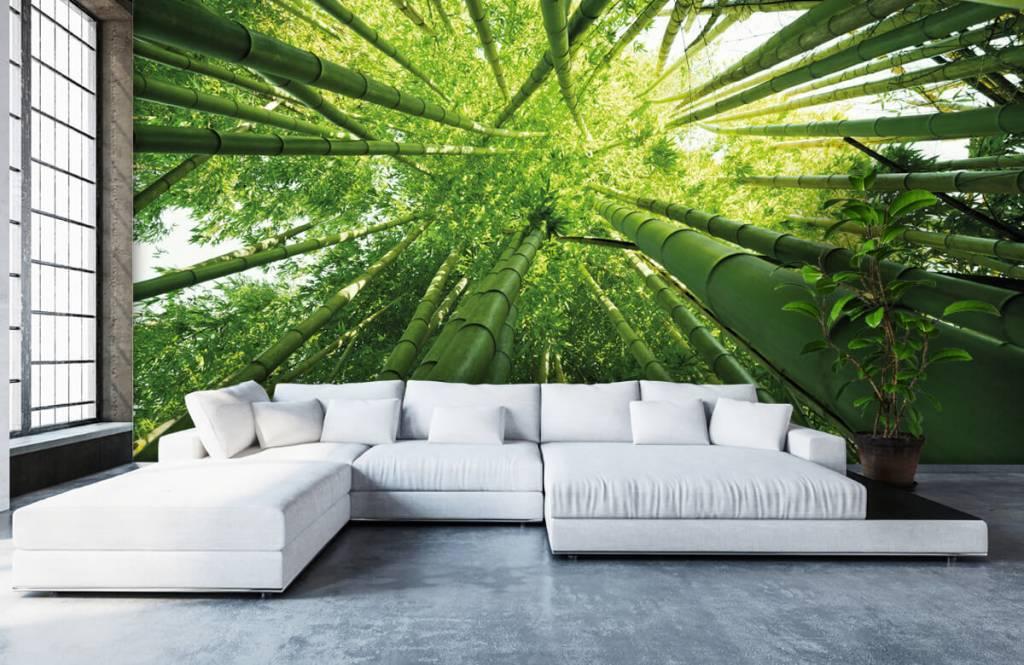 Forest wallpaper - Bamboo - Hallway 1