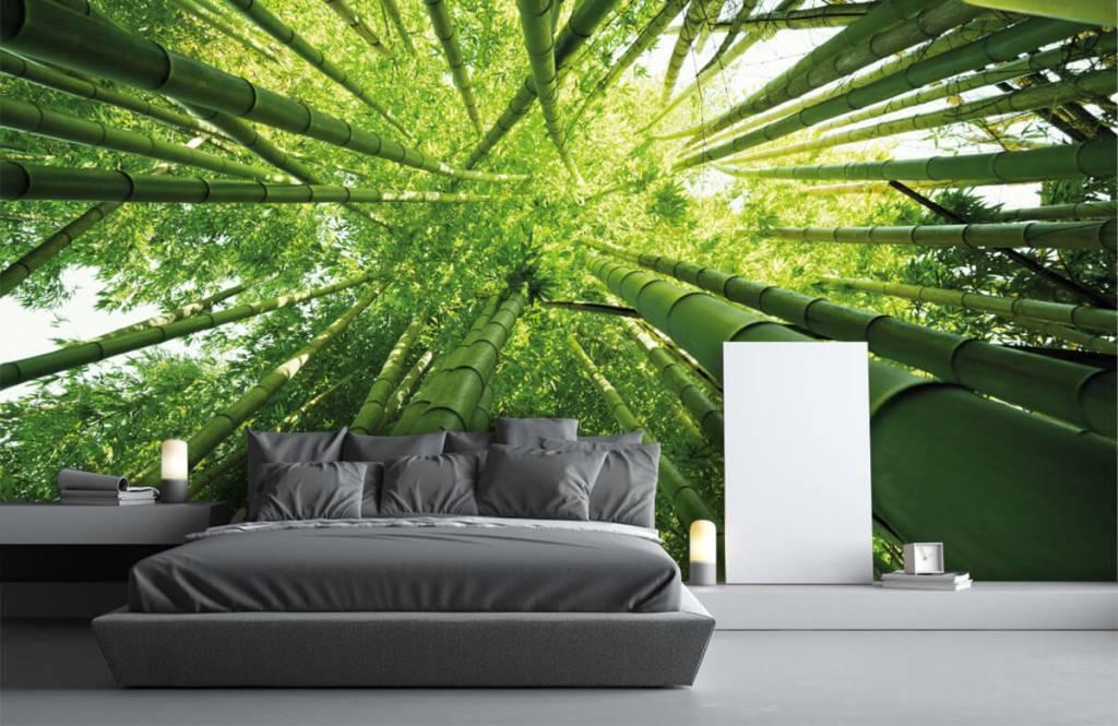 Forest wallpaper - Bamboo - Hallway 3