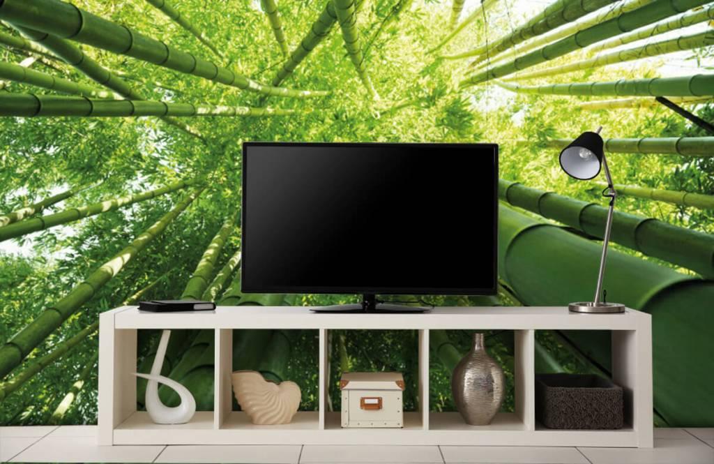 Forest wallpaper - Bamboo - Hallway 5