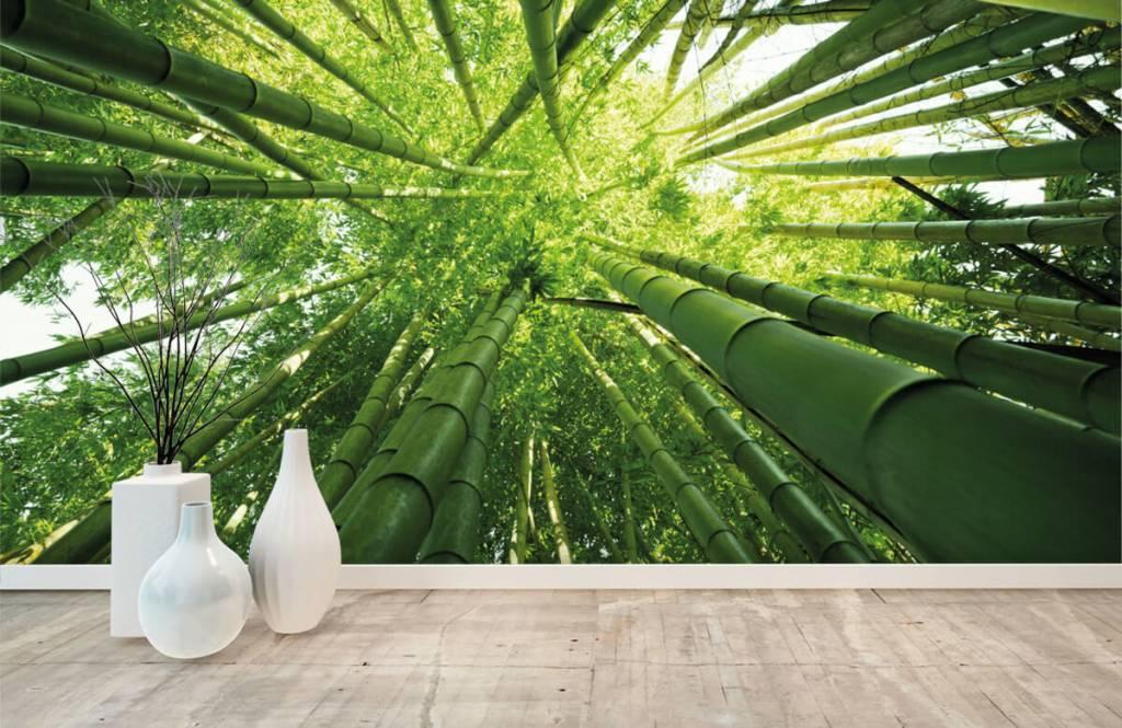 Forest wallpaper - Bamboo - Hallway 8