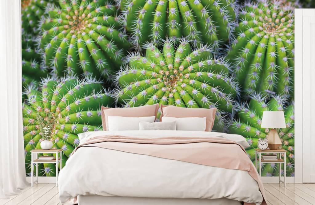 Cactus - Cacti - Teenage room 1