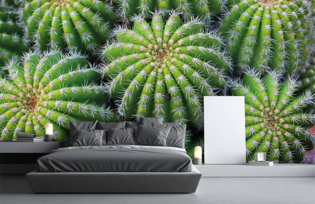Cactus - Cacti - Teenage room 2