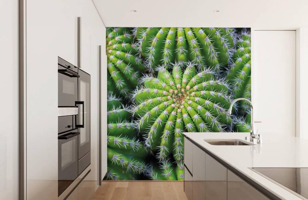 Cactus - Cacti - Teenage room 3
