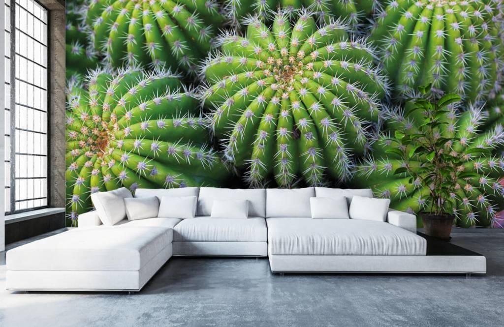 Cactus - Cacti - Teenage room 5