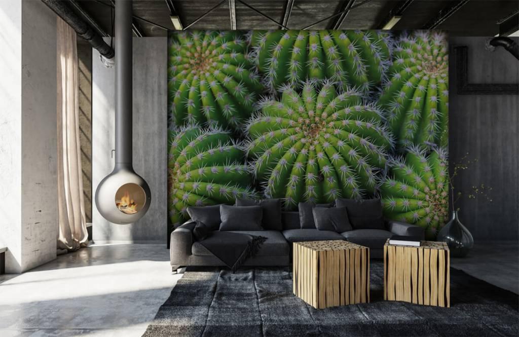 Cactus - Cacti - Teenage room 6