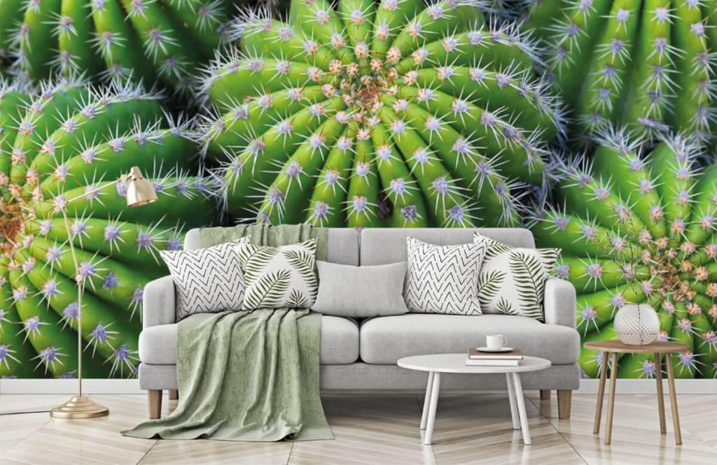 Cactus - Cacti - Teenage room 7