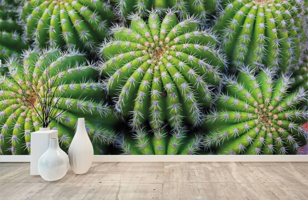Cactus - Cacti - Teenage room 8