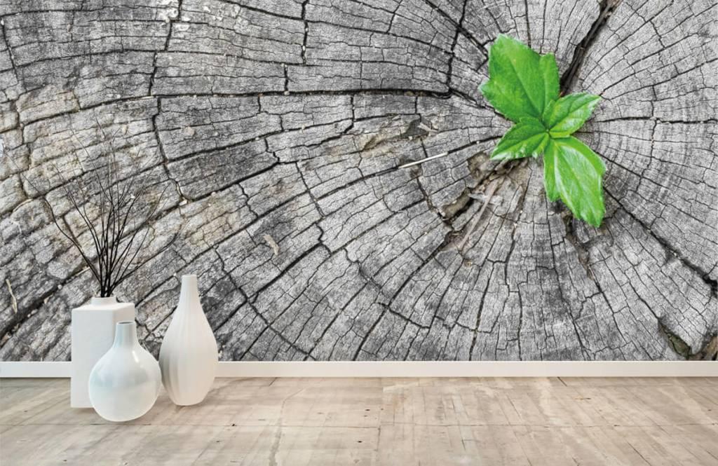 Wooden wallpaper - Diameter of a tree trunk - Bedroom 1
