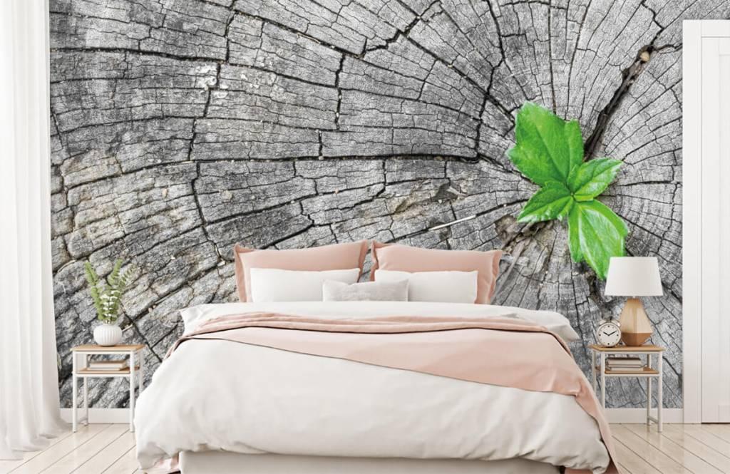 Wooden wallpaper - Diameter of a tree trunk - Bedroom 4