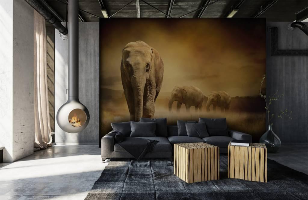 Animals - Three elephants - Teenage room 1