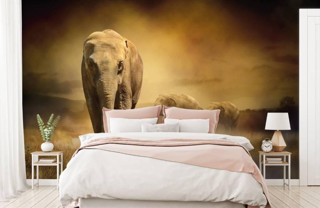 Animals - Three elephants - Teenage room 2