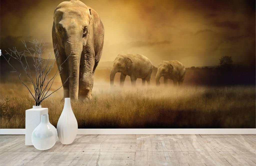 Animals - Three elephants - Teenage room 3