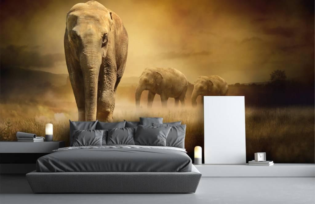 Animals - Three elephants - Teenage room 4