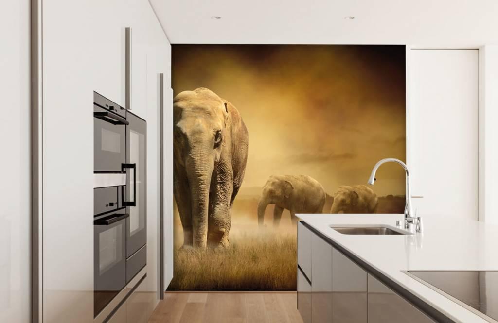 Animals - Three elephants - Teenage room 5
