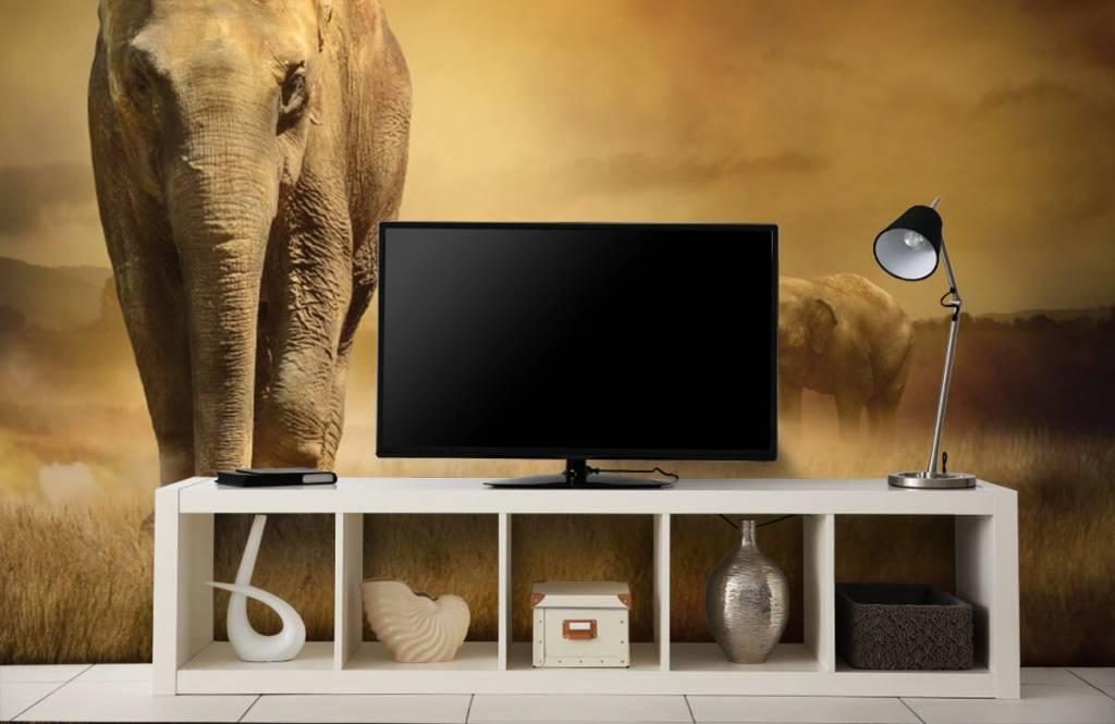 Animals - Three elephants - Teenage room 6