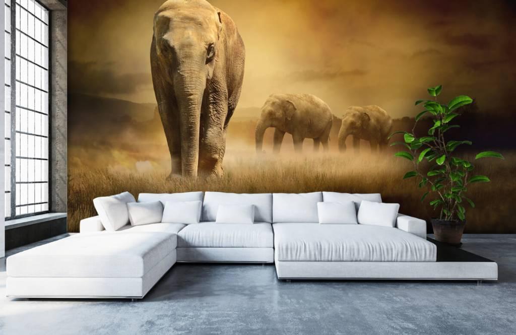 Animals - Three elephants - Teenage room 7