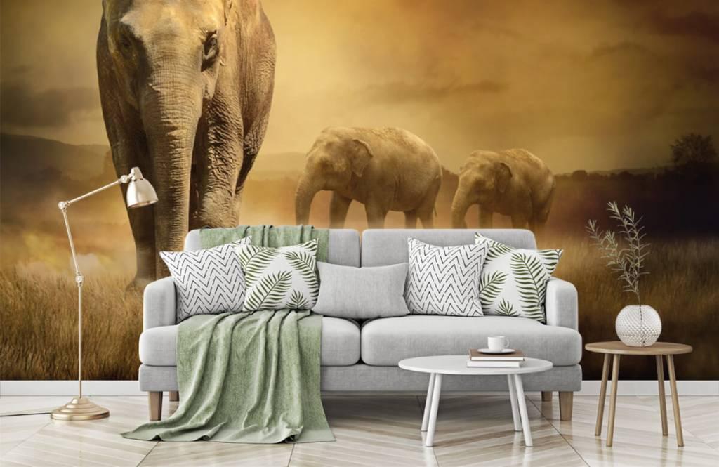 Animals - Three elephants - Teenage room 8