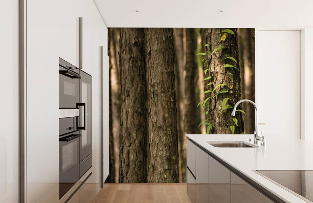 Forest wallpaper - Thin tree trunks - Entrance 1