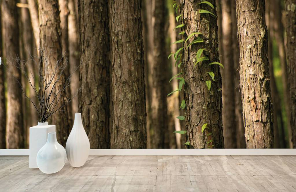 Forest wallpaper - Thin tree trunks - Entrance 8