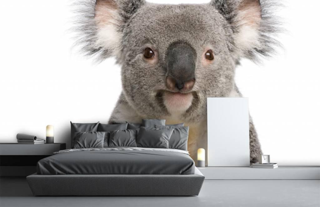 Other - Photo of a koala - Children's room 1