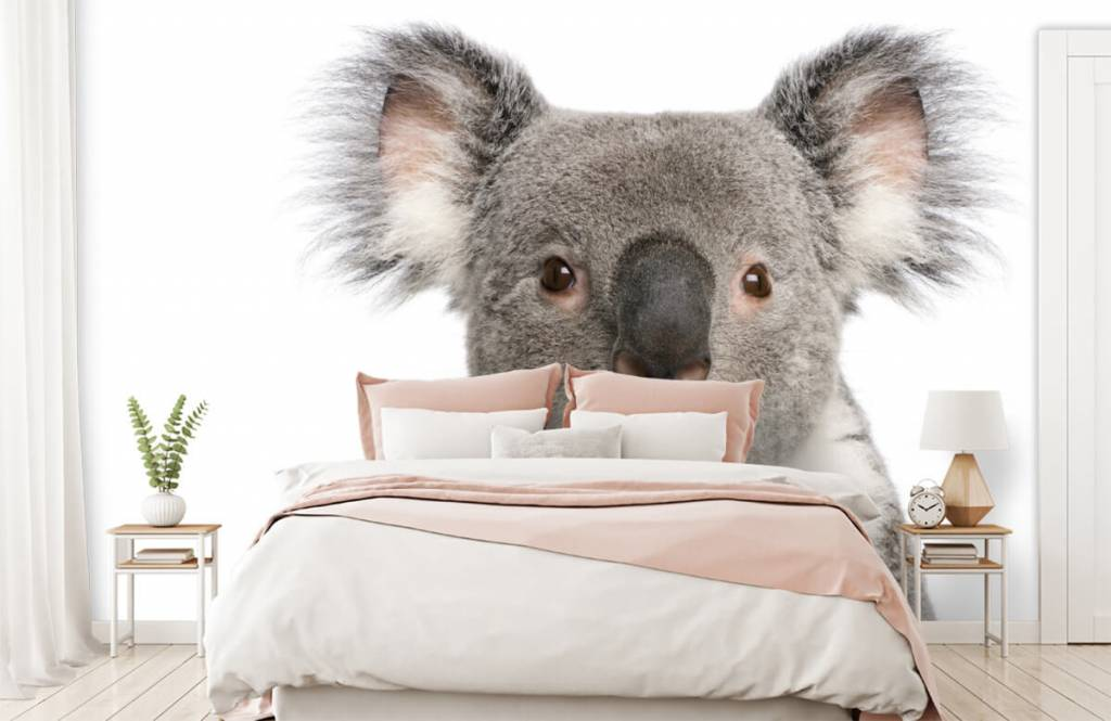 Other - Photo of a koala - Children's room 2