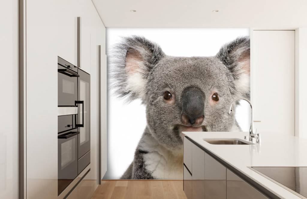 Other - Photo of a koala - Children's room 3