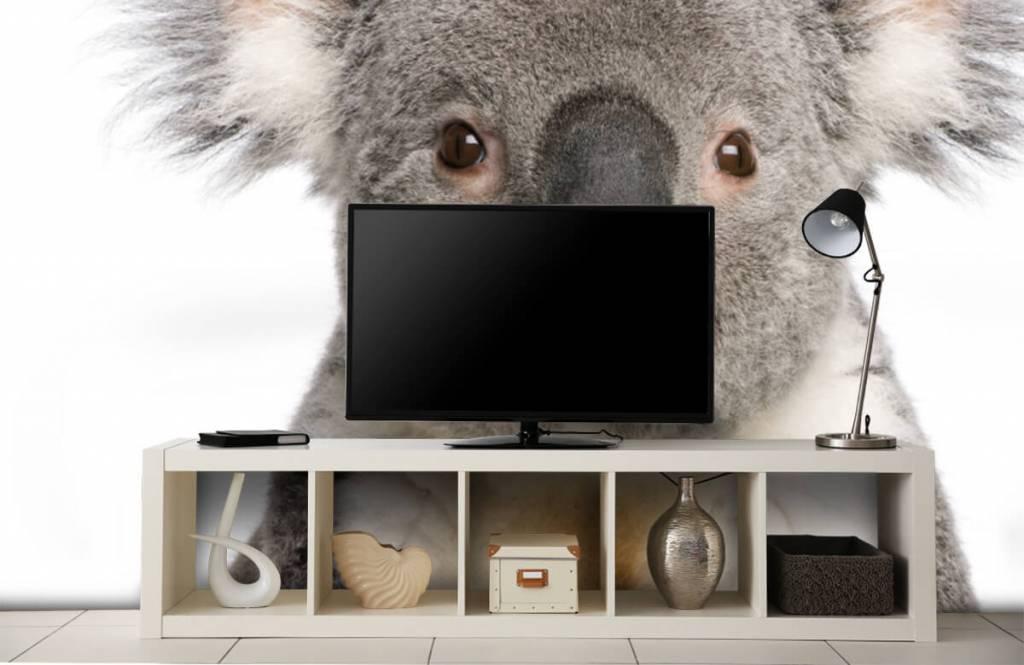 Other - Photo of a koala - Children's room 4
