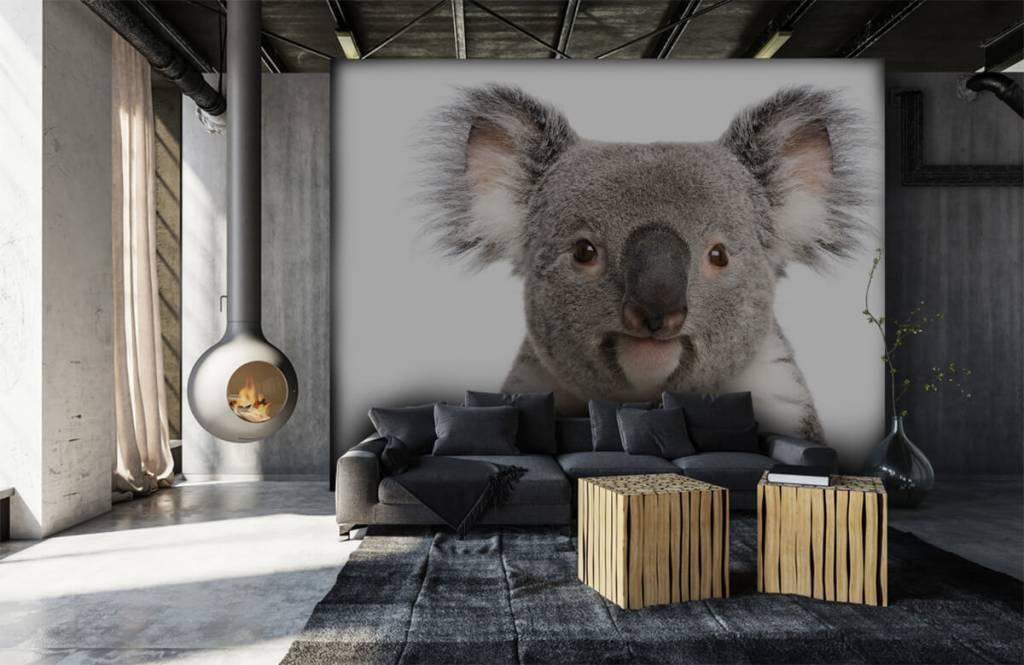 Other - Photo of a koala - Children's room 6