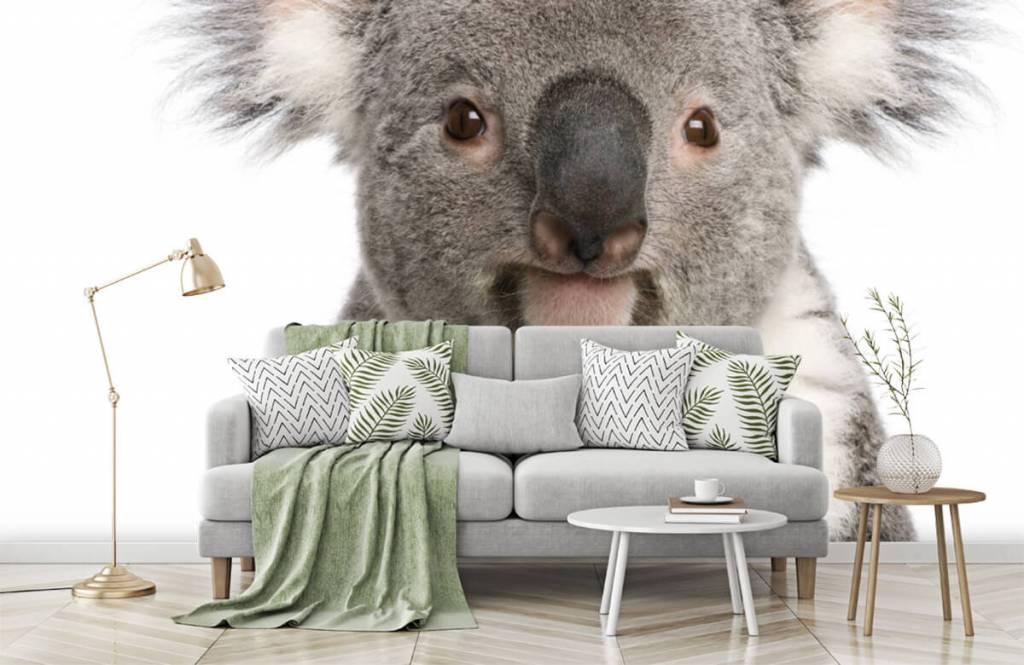 Other - Photo of a koala - Children's room 7