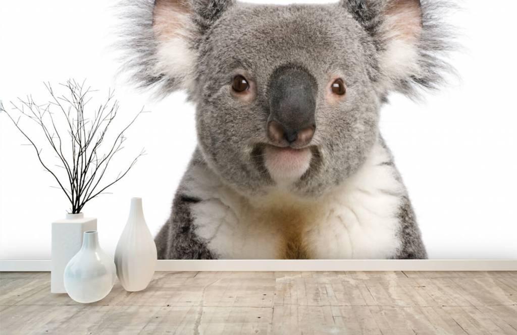 Other - Photo of a koala - Children's room 8