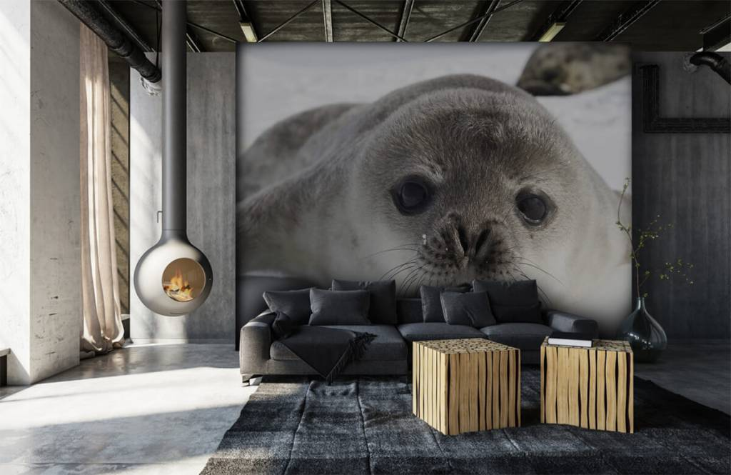Toddlers - Close-up of a seal - Children's room 5