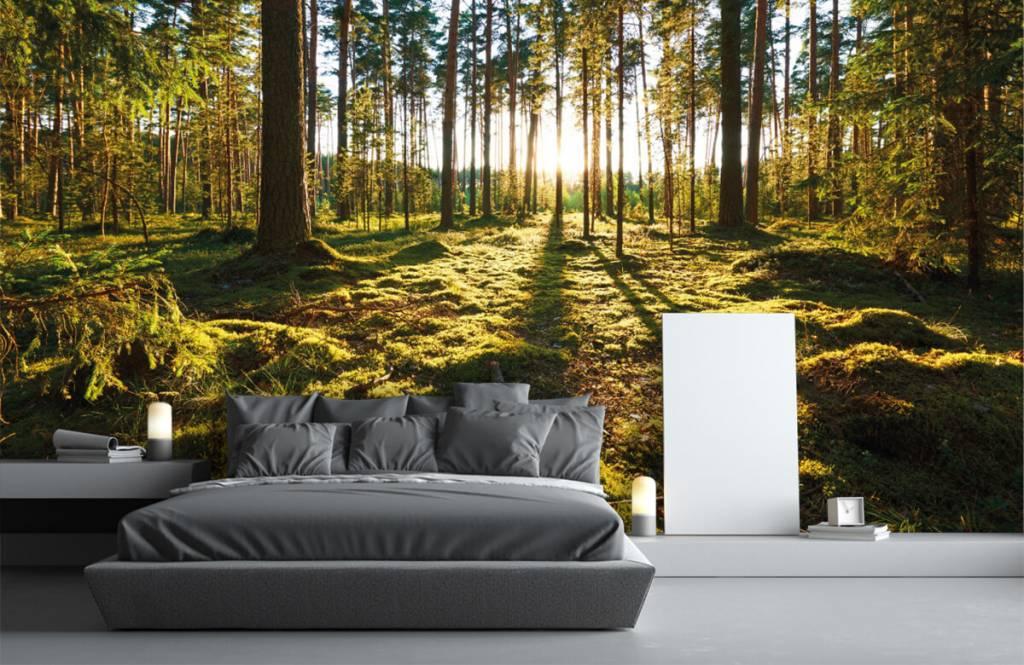 Forest wallpaper - Pine forest - Bedroom 1
