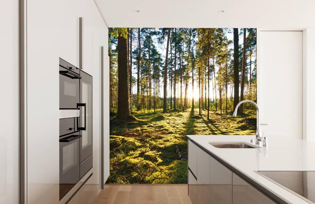 Forest wallpaper - Pine forest - Bedroom 2