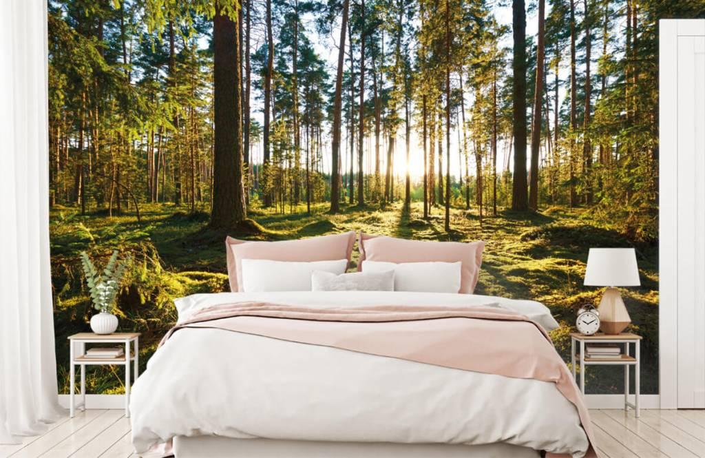 Forest wallpaper - Pine forest - Bedroom 3
