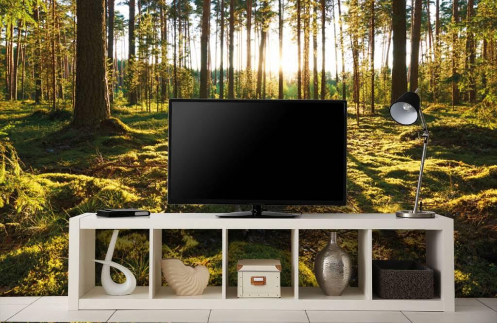 Forest wallpaper - Pine forest - Bedroom 4