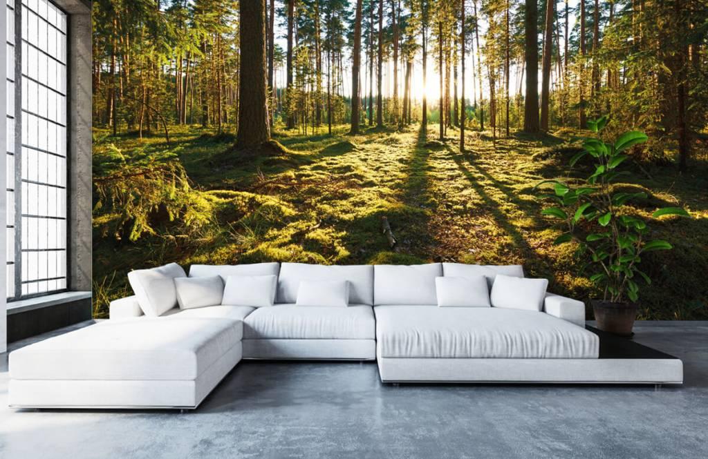 Forest wallpaper - Pine forest - Bedroom 5
