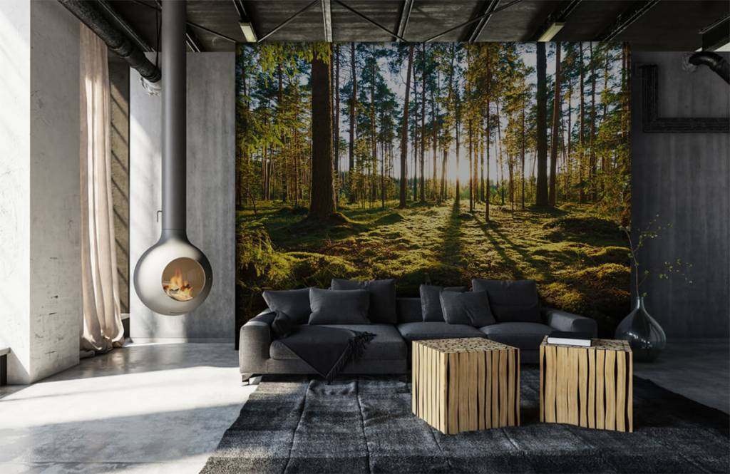 Forest wallpaper - Pine forest - Bedroom 6