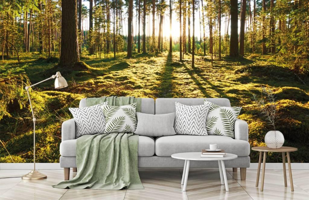 Forest wallpaper - Pine forest - Bedroom 7