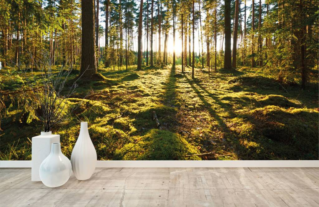 Forest wallpaper - Pine forest - Bedroom 9
