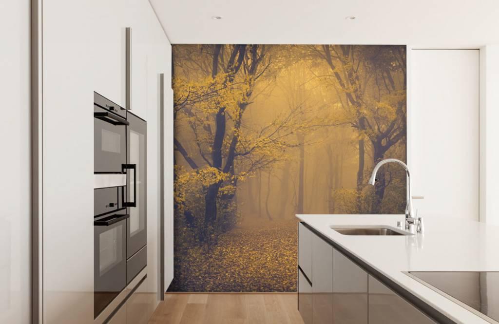 Forest wallpaper - Dark forest - Bedroom 4