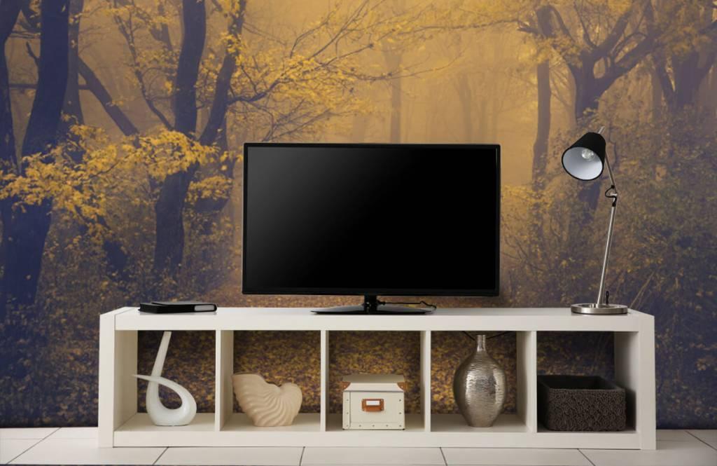 Forest wallpaper - Dark forest - Bedroom 5